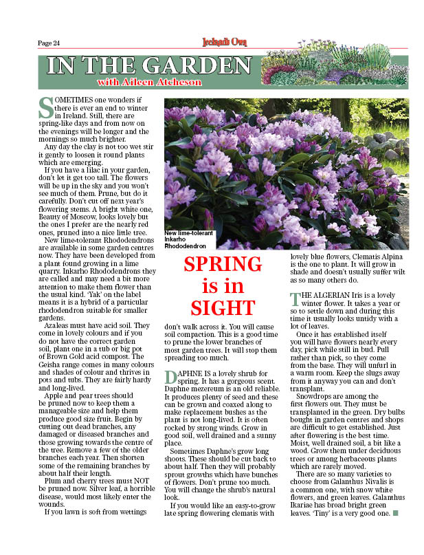 springinsight