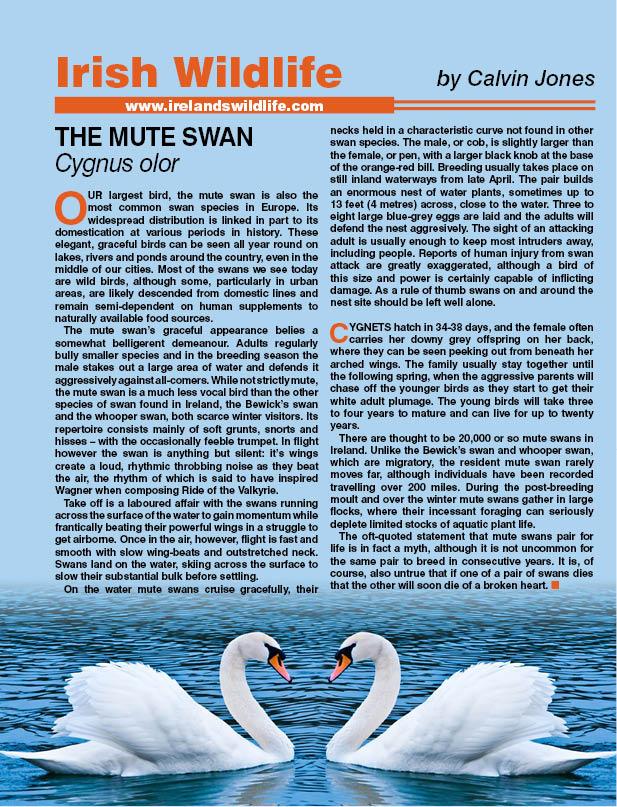 swansback