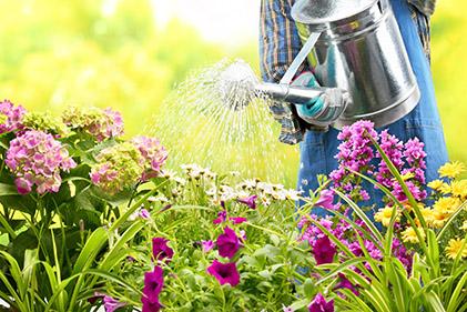 gardening_may