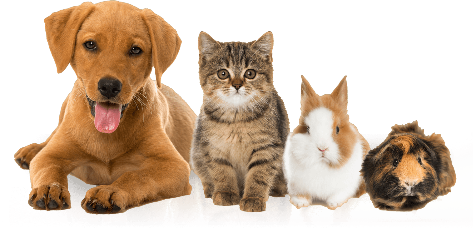Animal Lovers in Manchester, Hooksett, Concord