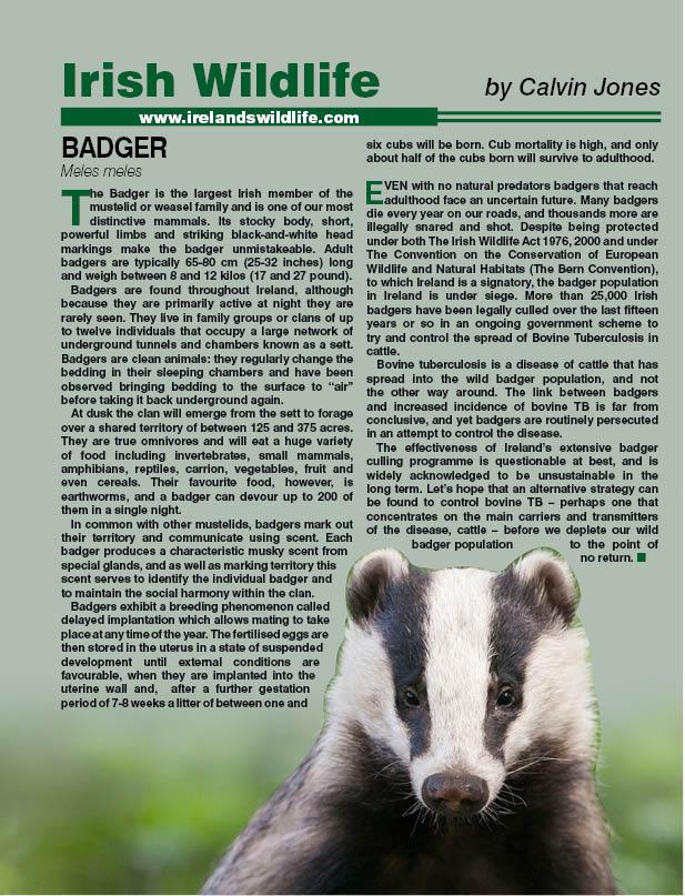 badgernew