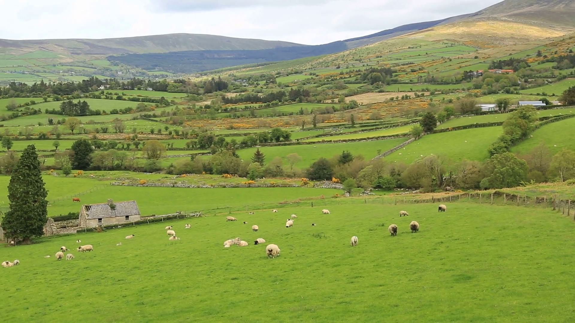 videoblocks-rolling-hills-of-irish-landscape_seeq5u7v5e_thumbnail-full01